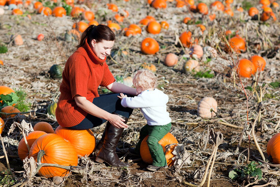 Pumpkin picking at All Seasons Orchard