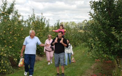 Apple Picking Tips